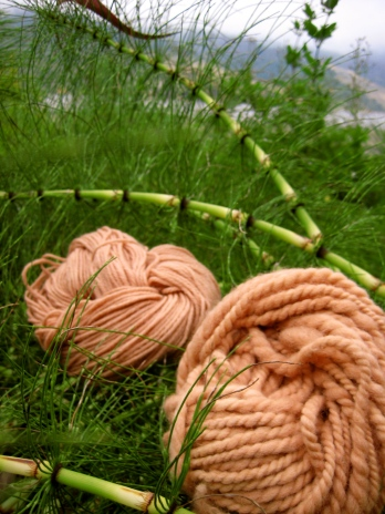 California horsetail is lush and green but creates a delicate rose-pink dye.